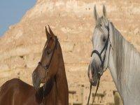 Partagez la passion du cheval