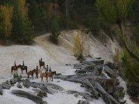 Randonnées à Fontainebleau