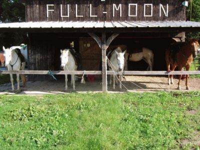 Full Moon Randonnées Equestres