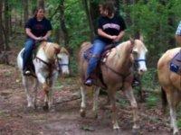 Randonnee Equestre Vezelay