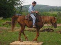 Stage d equitation en exterieur