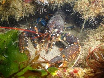Crouesty Dive Center