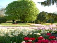 Le jardin des tulipes