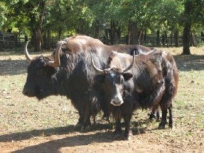 Gramat Parc Animalier