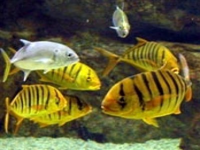 Aquarium Tropical de la Porte Dor�e