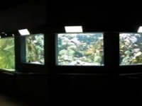 Une série de bacs marins