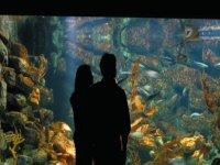 Découverte du fabuleux monde sous-marin