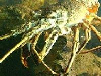 Des crabes