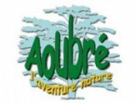 Aoubré