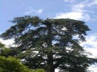 La Grimpe d arbres avec Tik et Tak