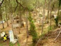 Aperçu du site boisé