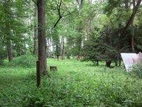 Action forestière