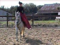 Ecole de spectacle equestre