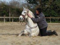Harmonie cheval cavalier