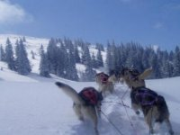 Mushing dans les Alpes