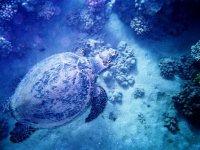 Découvrez la plongee sous marine