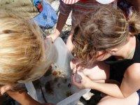 Découverte des organismes marins