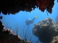 Exploration du monde sous marin