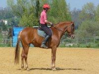 Le travail des chevaux