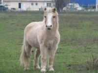 Les poneys de l Eperon Laurentais