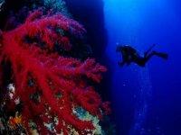 A la decouverte du monde sous marin