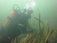 Plongee en Gironde