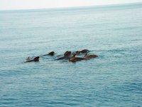 Baleines Dauphins et bien plus