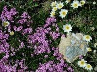 Flore de la montagne en ete