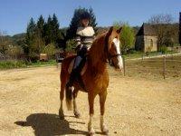 Balades a cheval avec les cavaliers de la vezere