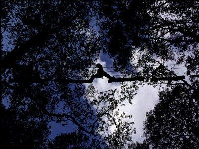 Nature Adventure Parcours Aventure