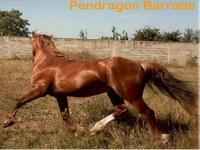Emotion cheval entoure de passionnes