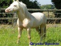 Qrysto vous attend en Dordogne