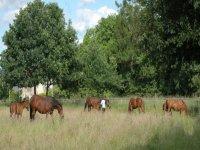 La cavalerie des Ecuries de la Borde