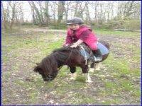 Activite en poney pour les plus petits