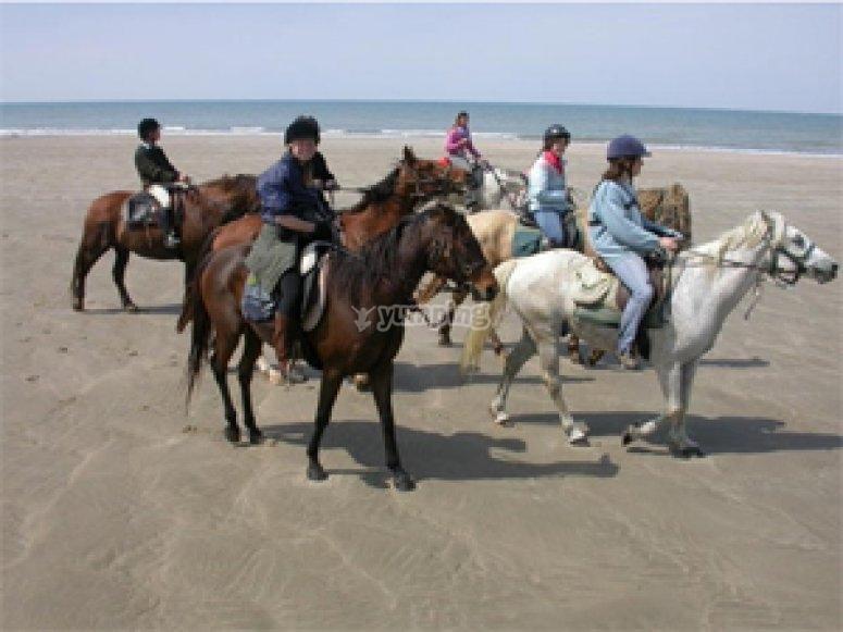 Randonnée équestre sur les plages du Médoc