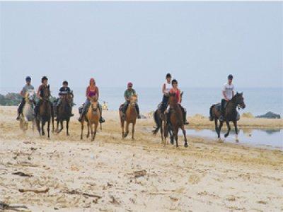 Randonnée à cheval 1 journée plage en Médoc