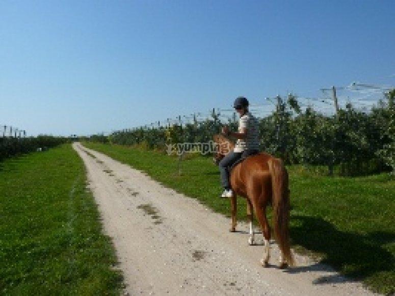 Lignieres de Touraine a Cheval