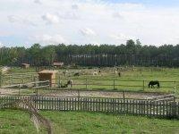 Paradis des chevaux