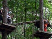 Installation dans les arbres