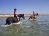 Randonnee cheval en mer dans le 50