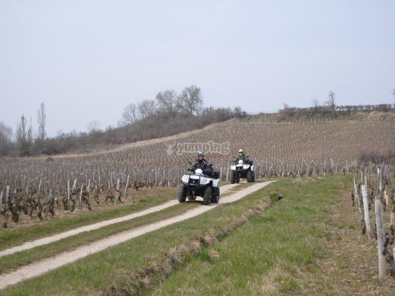Bienvenue dans le vignoble Bourguignon.