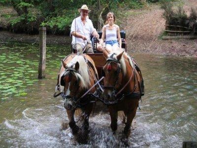 Indian Forest Le Bois Lambert Randonnées Équestres