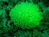 Flore sous marine unique