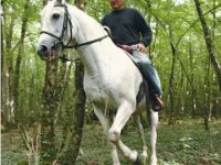 Sorties a cheval