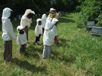 Decouverte de l apiculture