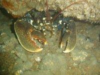 Des rencontres uniques sous l eau
