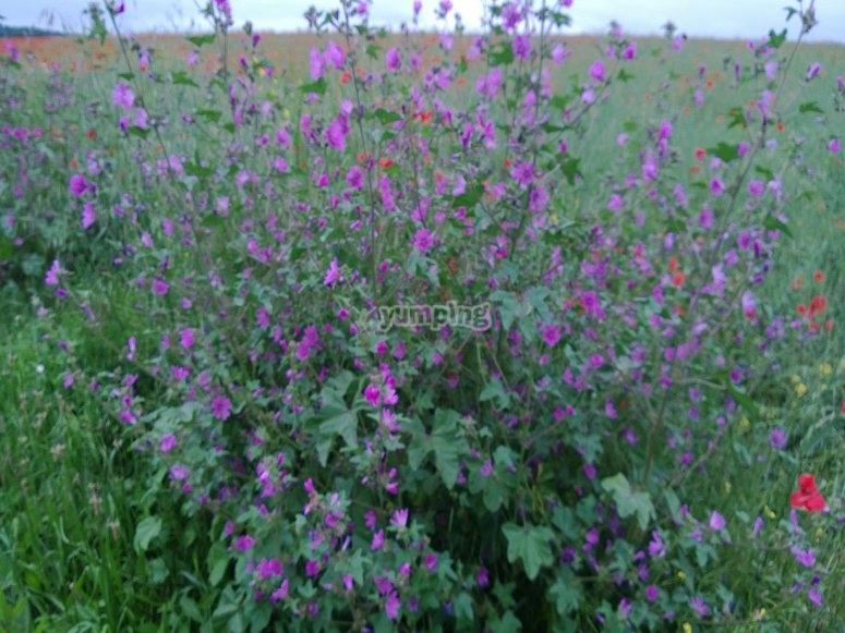 Avricourt en fleur