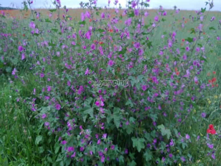Paysages fleuris de Picardie