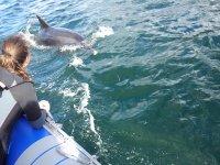 Rencontre dauphin