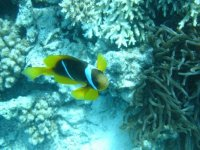 D incroyables decouvertes sous l eau